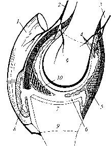 Учение о строении суставов животных коксартроз тазобедренного сустава советы