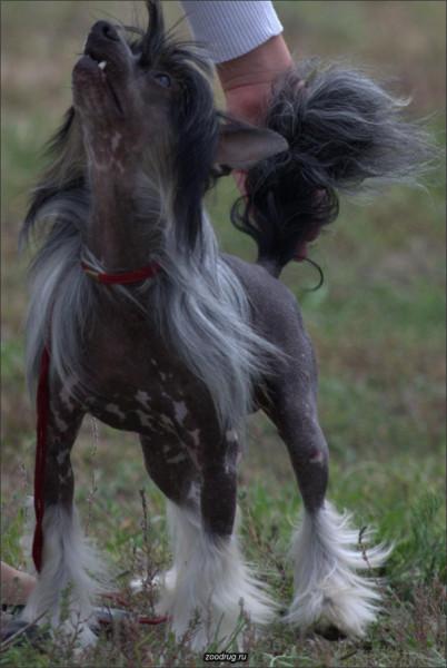 Болезни собак Фото 1