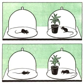 Строение и прорастание семени
