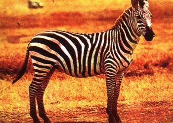 животные африканской саванны