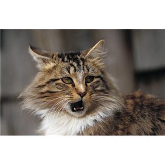 Болезни кошек Фото 1